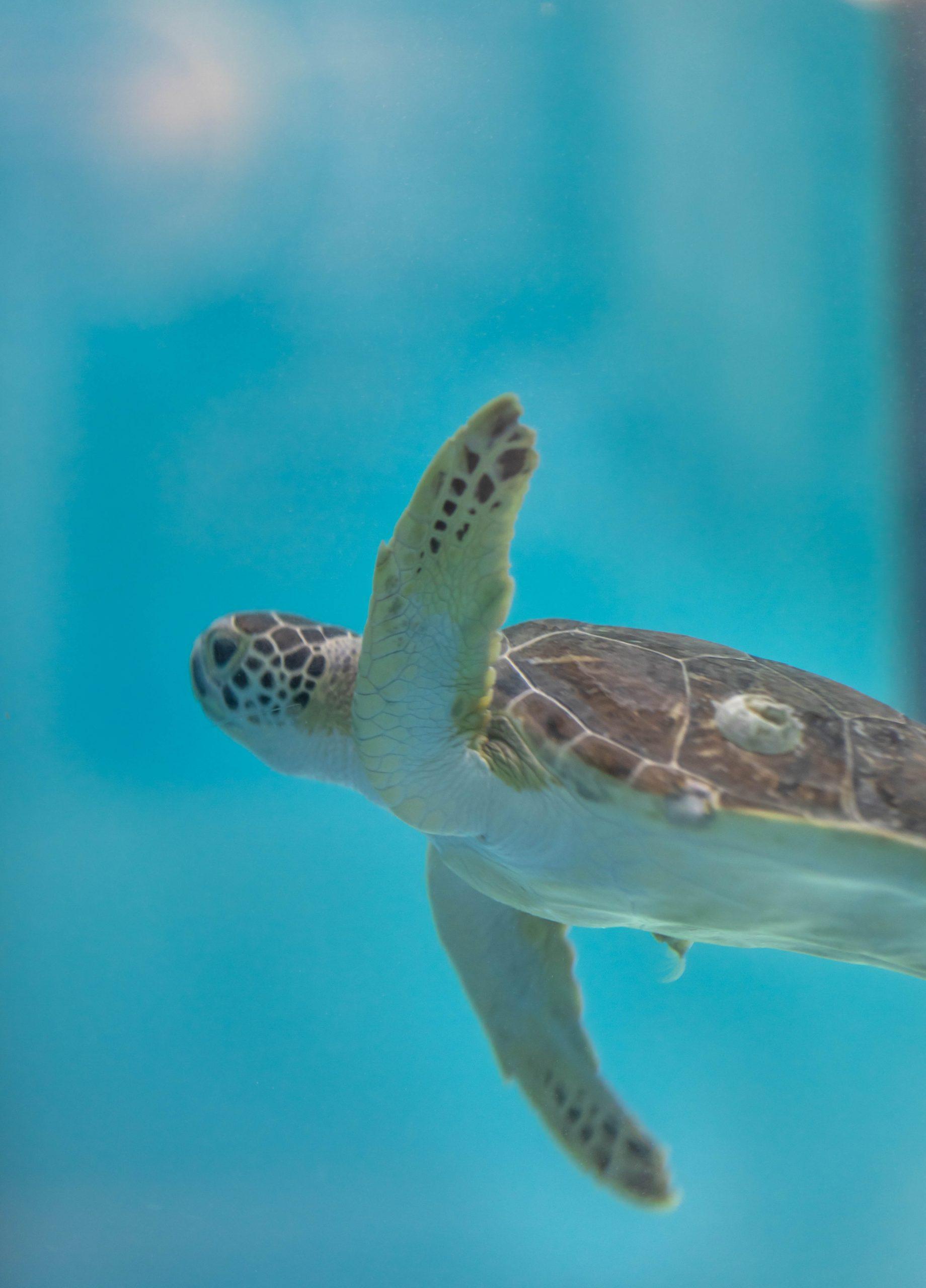 The South Carolina Aquarium & Sea Turtle Care Center Photographed by Luxury Travel Writer Annie Fairfax