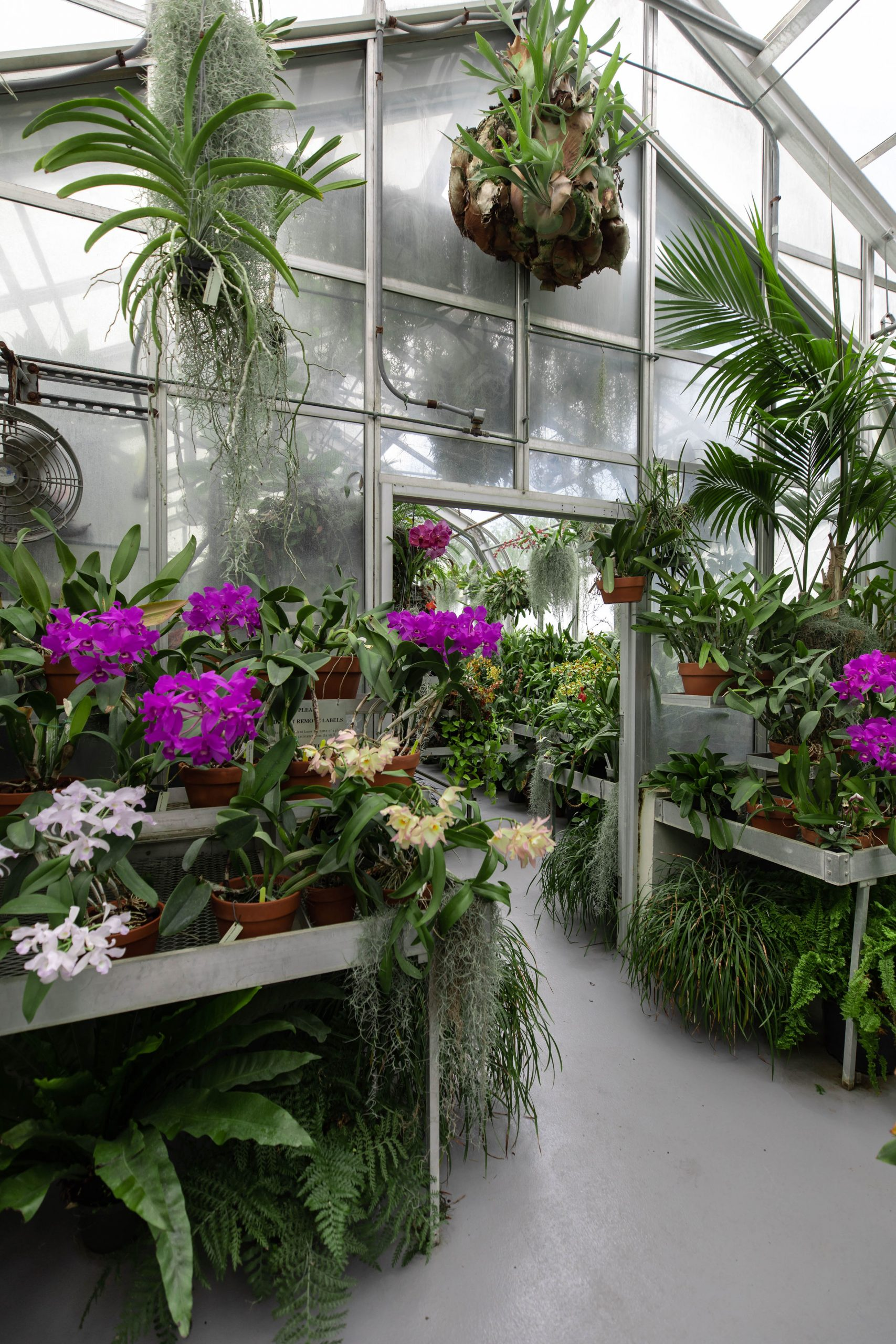 Glasshouse at Hillwood Estate, Museum & Gardens in Washington, D.C. by Luxury Travel Writer and Photographer Annie Fairfax