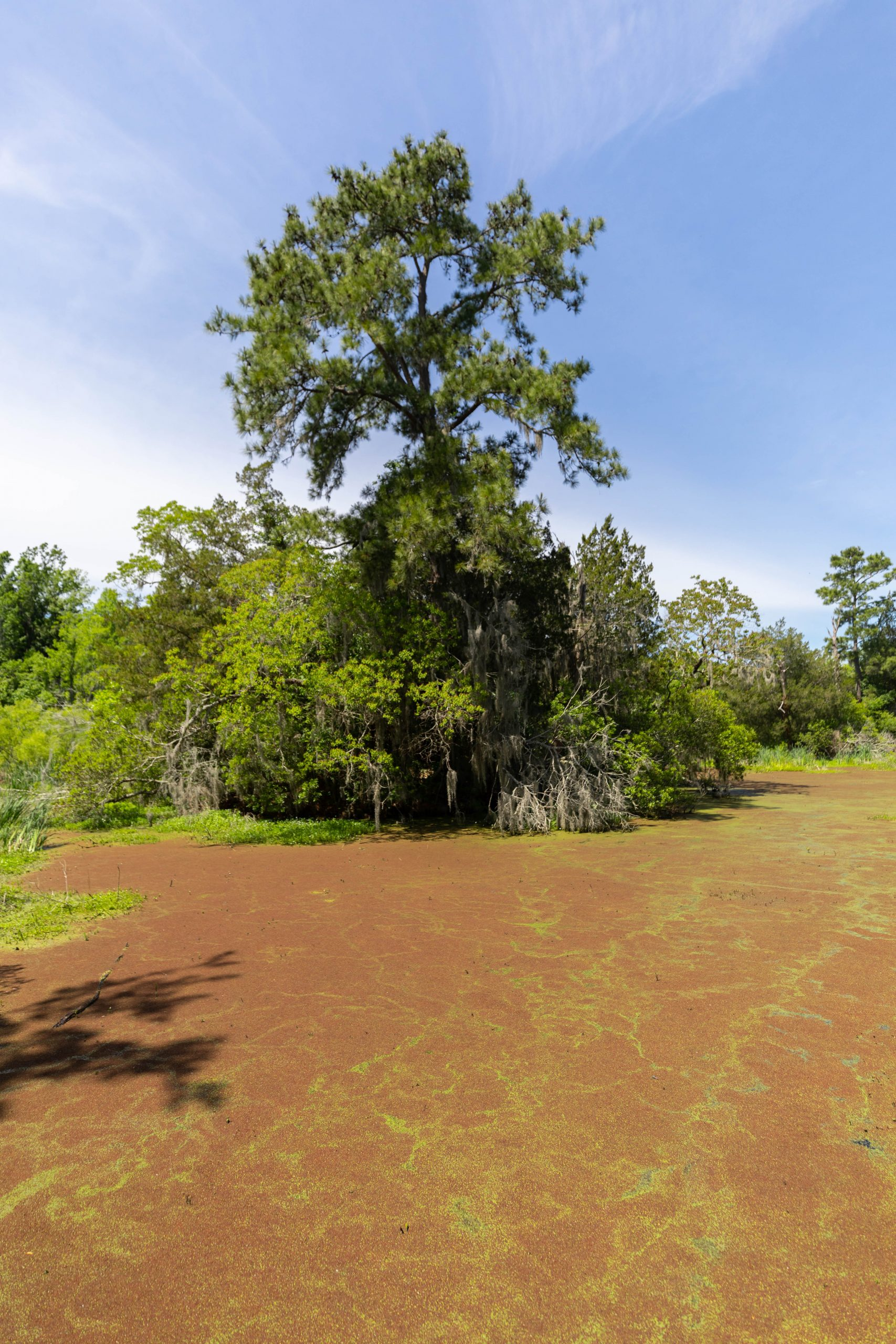 Swamp Safety Audubon Swamp Garden Inside Magnolia Plantation in Charleston, South Carolina Photographed by Luxury Travel Writer and Photographer Annie Fairfax