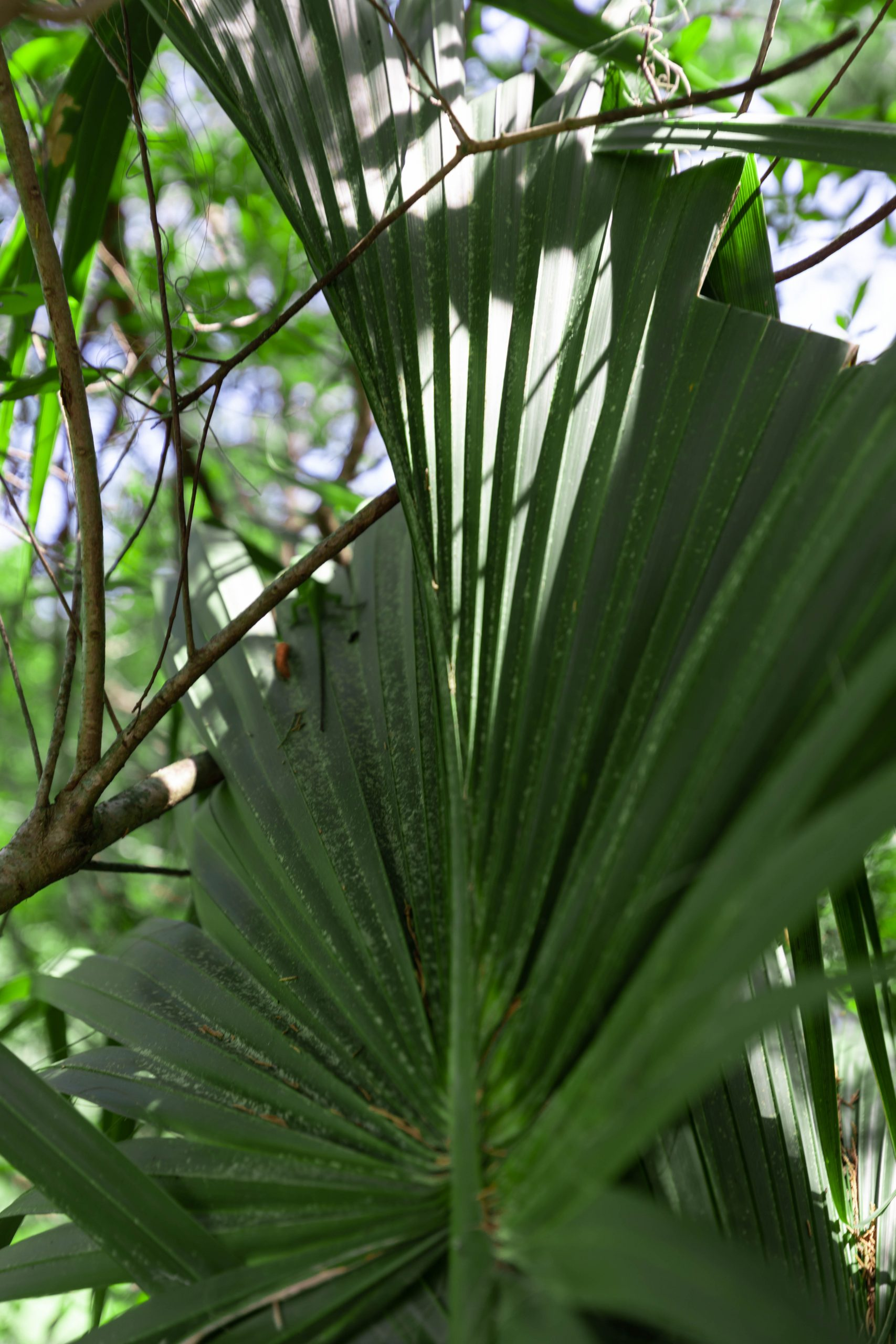 Audubon Swamp Garden Inside Magnolia Plantation in Charleston, South Carolina Photographed by Luxury Travel Writer and Photographer Annie Fairfax