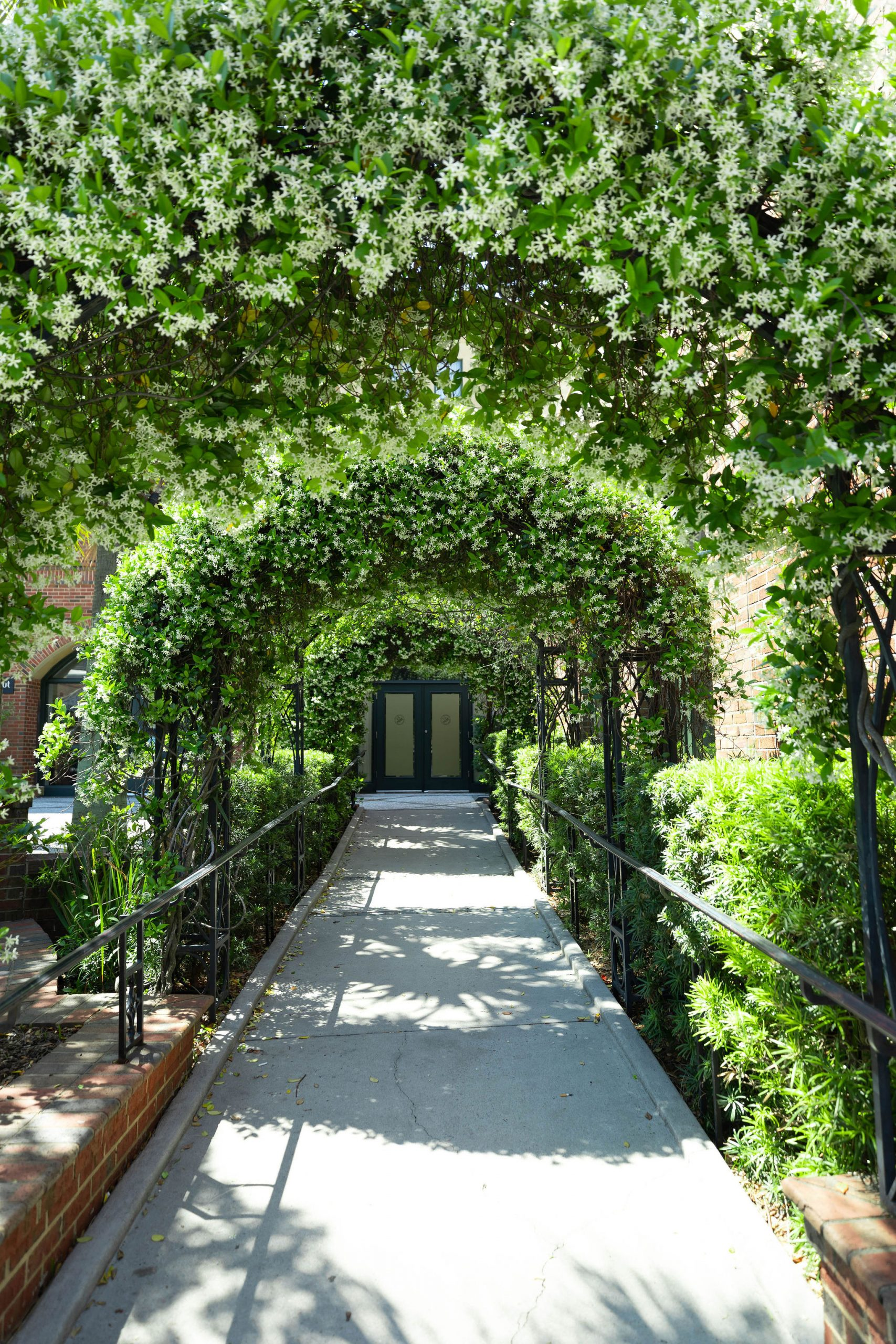 Blooming Jasmine Arches Architecture of The Holy City Charleston Luxury Travel Guide by Photographer Annie Fairfax South Carolina Vacation Ideas and Honeymoon Inspiration
