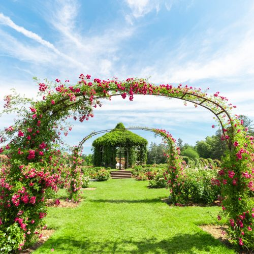 The United State's Oldest Rose Garden