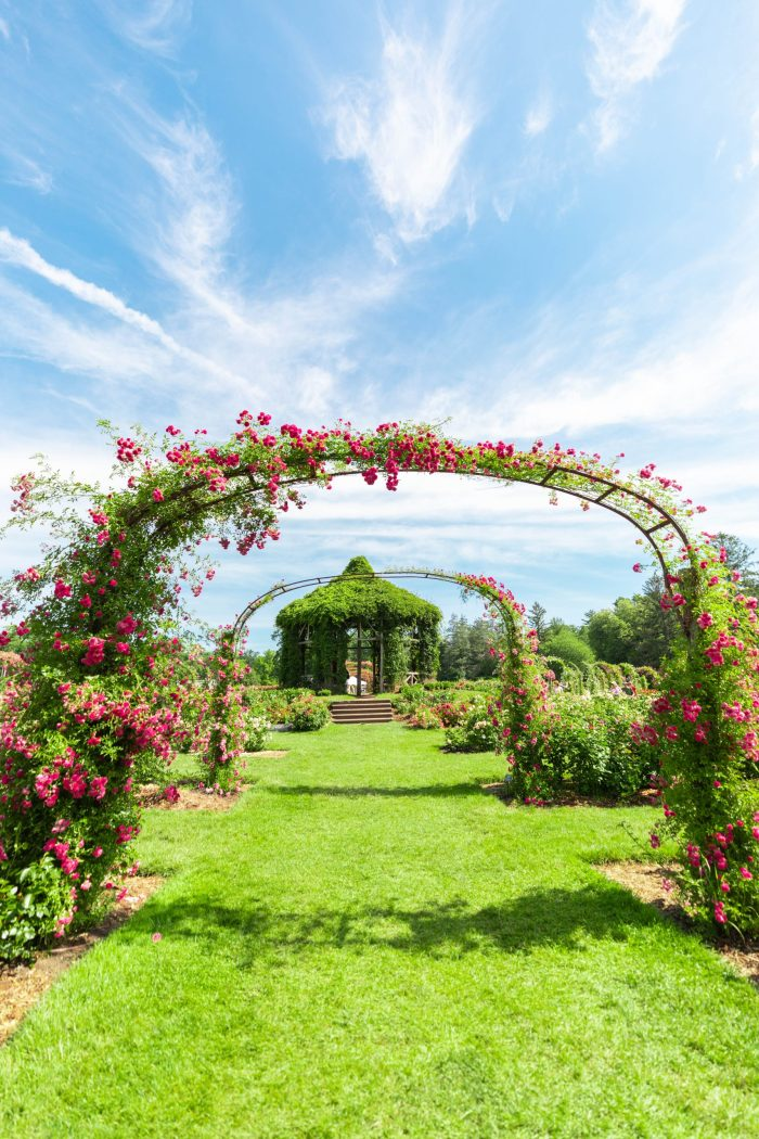 The Helen S Kaman Rose Garden within Elizabeth Park in Hartford, Connecticut
