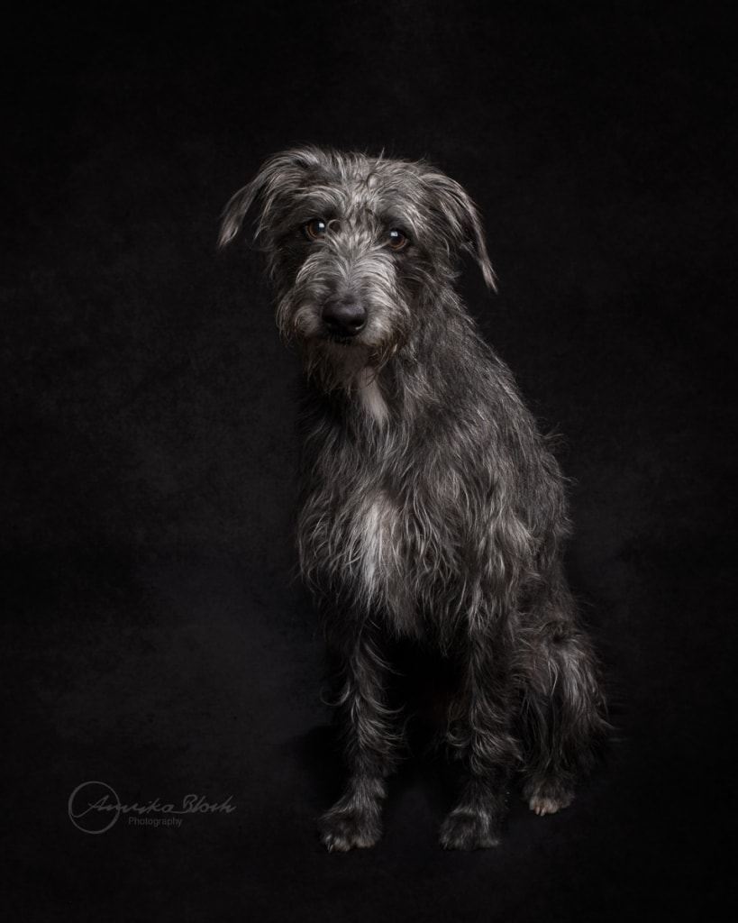 Dog Photography in Maida Vale, Central London