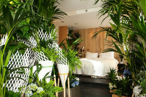 Les plantes vertes dans la chambre annikapanika for Plante pour chambre