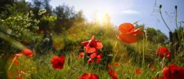 printemps-1207247-jpg_1082593