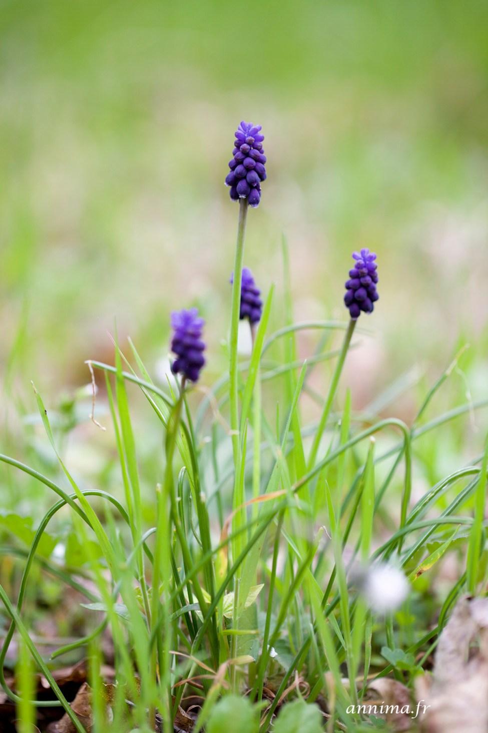 Printemps-fleurs19