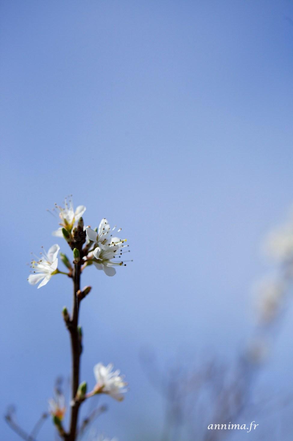 Printemps-fleurs6