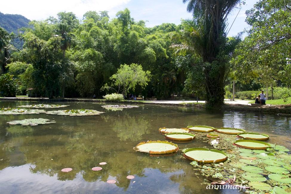 jardin-botanique-rio11