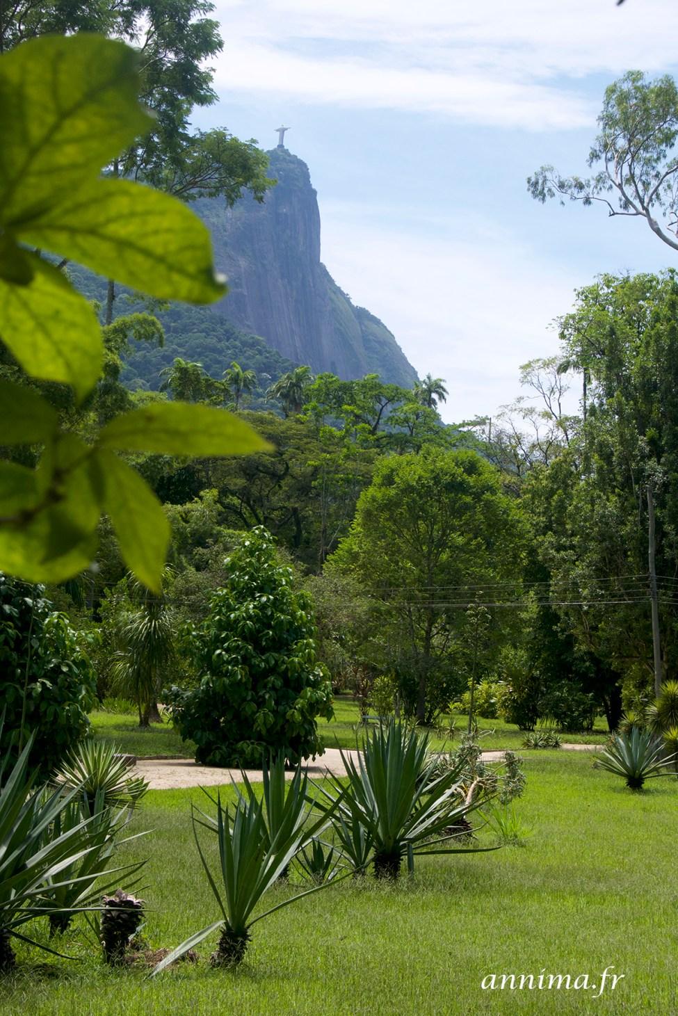 jardin-botanique-rio17
