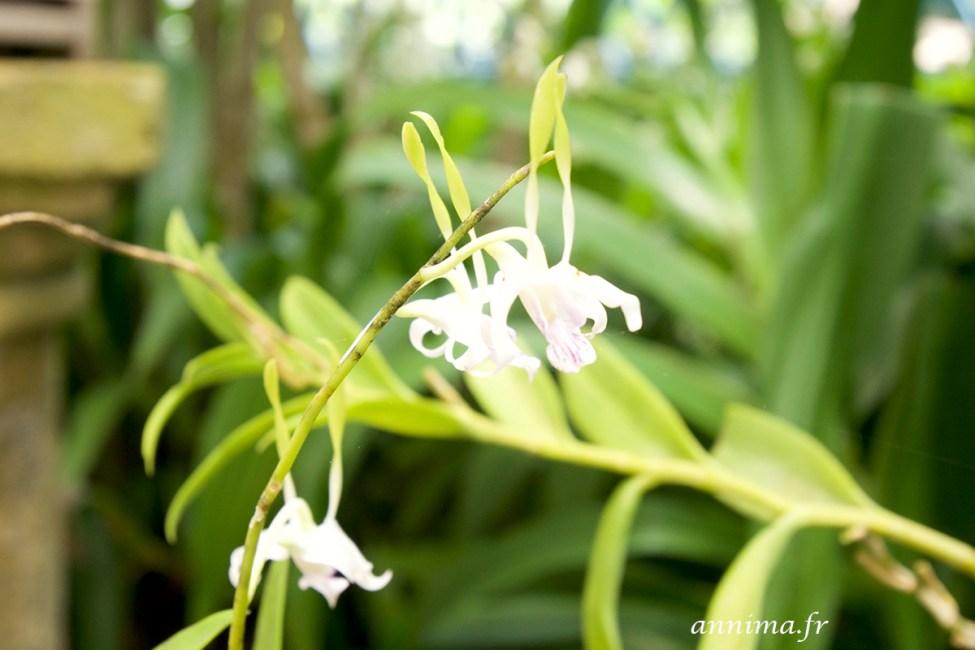 jardin-botanique-rio21