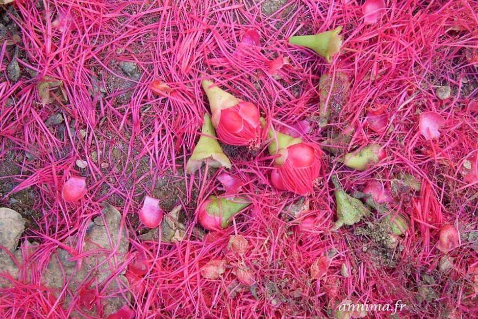 jardin-botanique-rio3