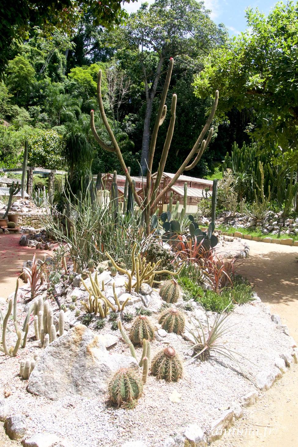 jardin-botanique-rio4