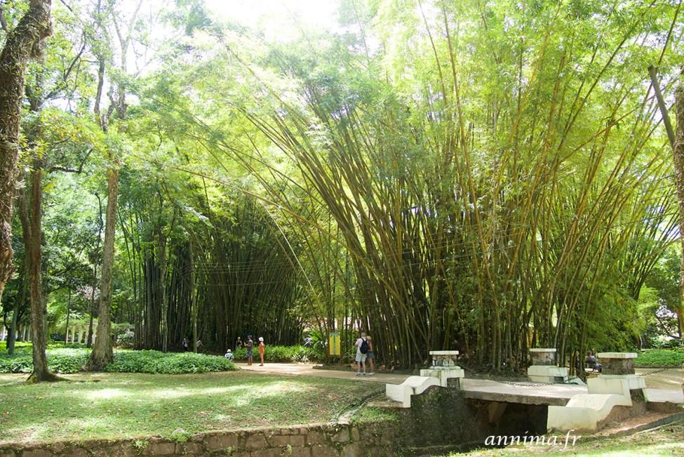 jardin-botanique-rio40
