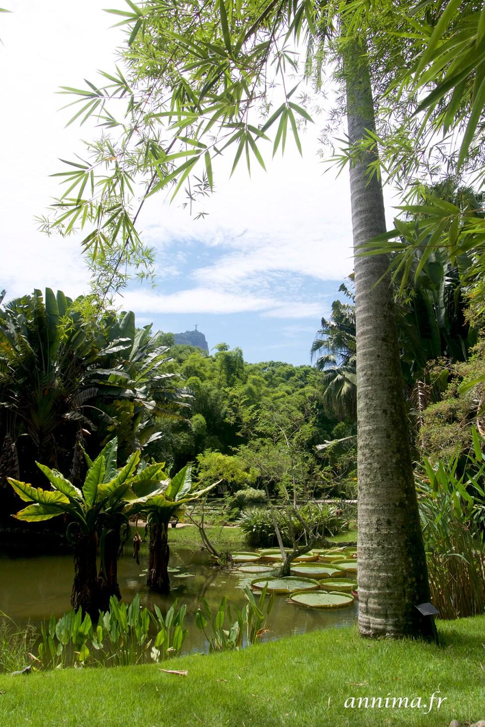 jardin-botanique-rio42