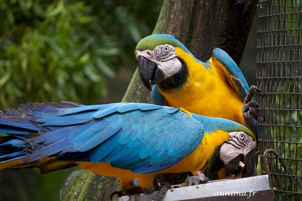 parc-des-oiseaux44