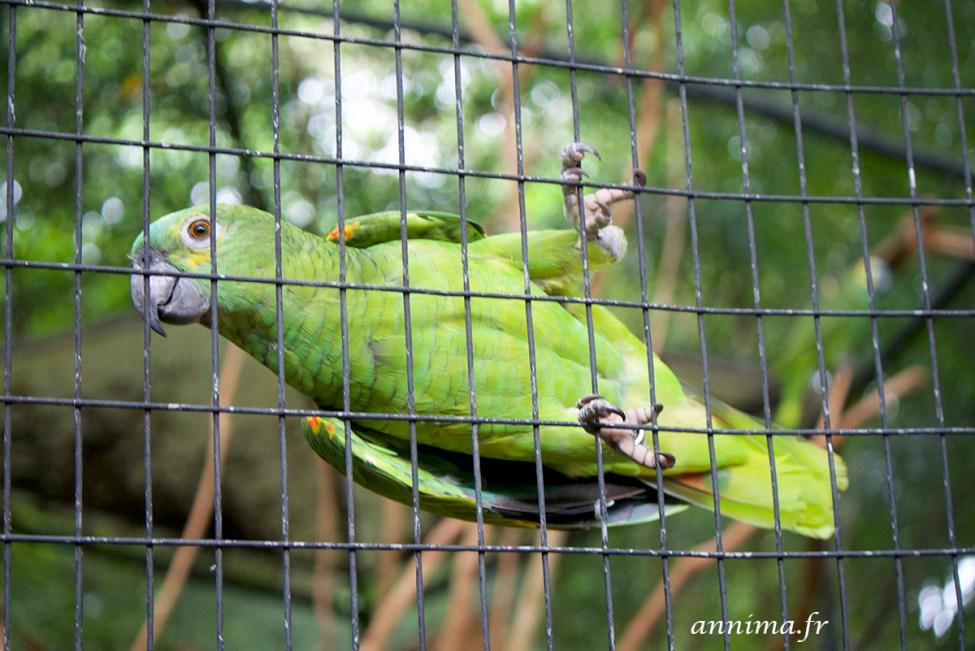 parc-des-oiseaux9
