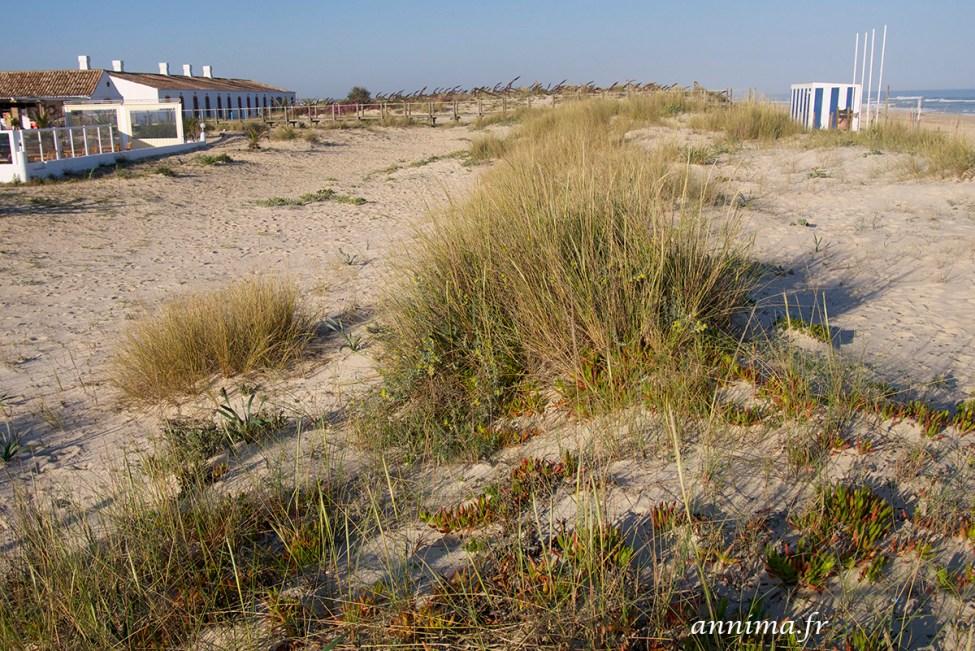 Algarve- Praia do Barril