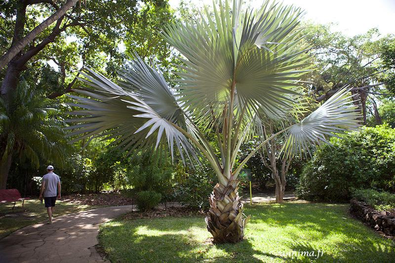 Une balade dans le jardin d'Eden