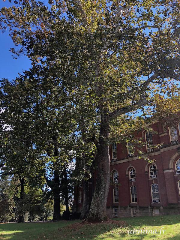 USA : L'université de Virginie ou UVA.