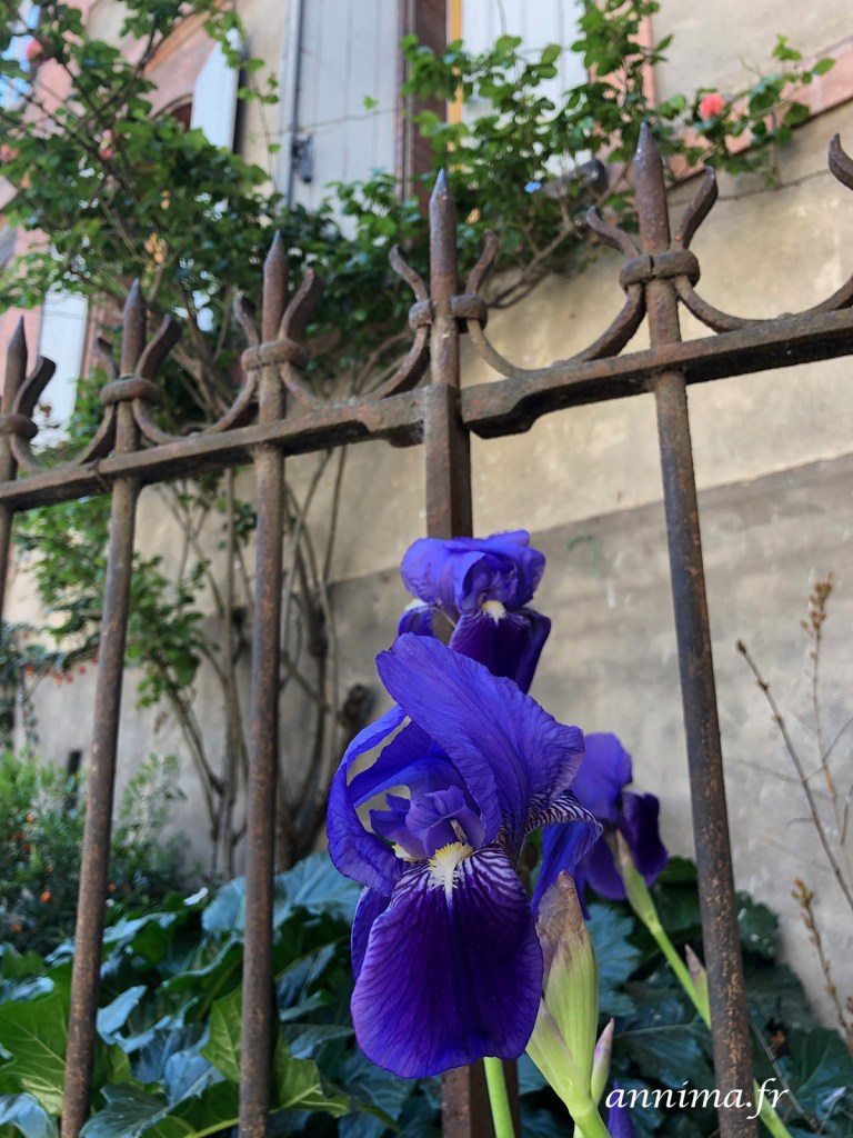 Iphoneography de mars 2019, le timide printemps