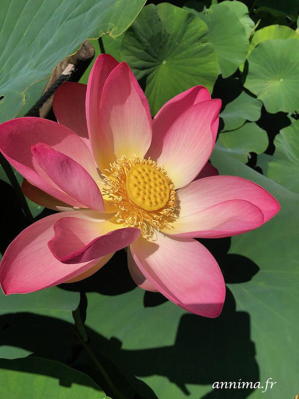 Une sortie exotique : Le jardin des Martels #EnFranceaussi, thème exotique