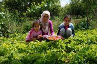 Family picking strawberries for us!!