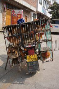 Chicken delivery service