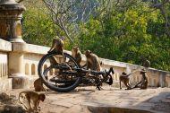 Bike enthusiasts