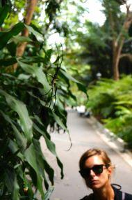 A Botanical Garden local