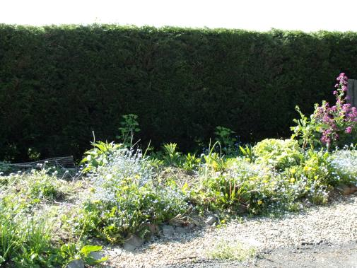 Polyculture 1, May 2016
