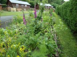 Polyculture 1 across to 4, July 2016