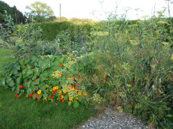 Polyculture 2, August 2016