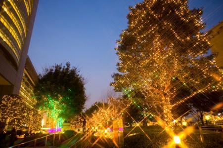 【2020年版】新宿でクリスマスディナーならここ!新宿通の筆者おすすめのお店15選