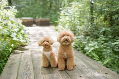 【2020年版】軽井沢で犬OKのランチはここ!軽井沢好きの筆者おすすめの15店