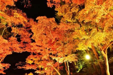 【2021年版】柏崎デートならここ!新潟デート経験者おすすめのスポット15選【公園・絶景スポット・温泉など】
