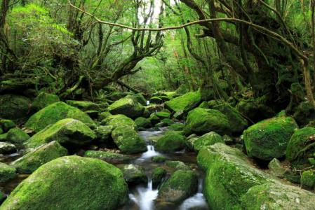 【2021年版】屋久島デートならここ!旅行好きライターおすすめの15スポット【絶景・自然スポット・温泉・グルメ】