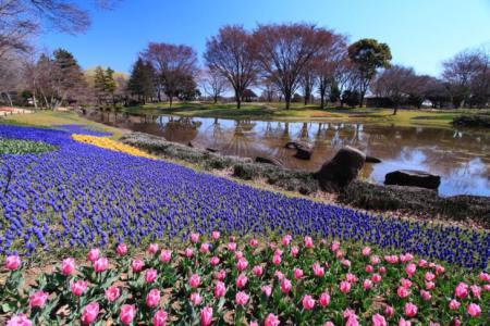 【2021年版】立川で和菓子ならここ!関東在住ライターおすすめの15選【話題の人気店・個性派・贈り物にも◎】