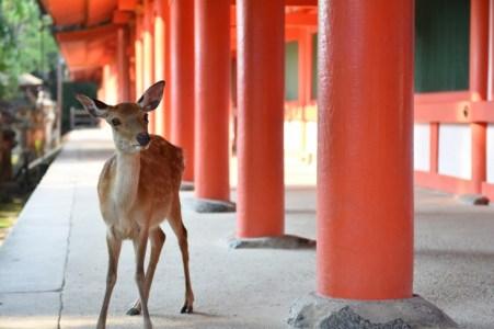奈良公園周辺のデートならここ!よく行く筆者厳選のデートスポット【15選】
