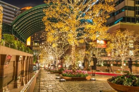【2020年版】恵比寿のクリスマスディナーならここ!恵比寿通がおすすめしたい飲食店15選
