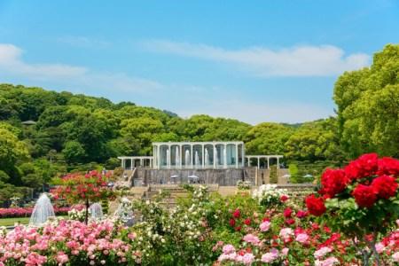 【2021年版】須磨離宮公園周辺のレストランならここ!兵庫県民おすすめの4店【歴史・本場イタリアン・絶景・サービス◎など】