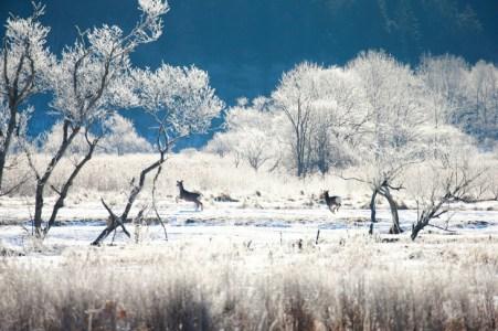 【2021年版】冬の北海道デートならここ!冬の北海道に10回以上行った筆者おすすめのスポット15選