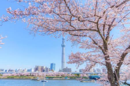 【2021年版】関東の桜が見えるドライブデートならここ!千葉県在住の筆者おすすめの15スポット【定番からちょっと穴場の花見スポットまで】