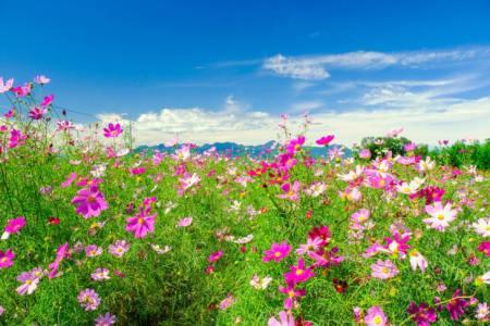【2021年版】高崎デートならここ!旅行好きライターおすすめの30スポット【自然・歴史スポット・文化施設・温泉・グルメなど】