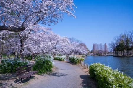 【2021年版】上尾デートならここ!関東在住の筆者おすすめの15スポット【自然・アクティブ・グルメなど】