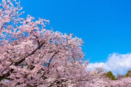 【2020年版】関西の春ドライブデートならここ!関西在住の筆者おすすめの15スポット