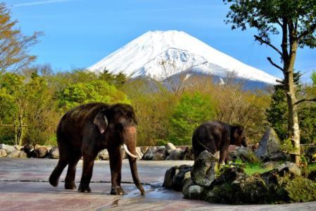 【2021年版】裾野デートならここ!近隣住民おすすめの15スポット【富士山絶景ポイント・動物・テーマパーク・アクティブなど】