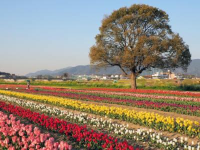 【2021年版】直方デートならここ!福岡在住の筆者おすすめの15スポット【定番・散策・ホタル・公園・アクティビティなど】