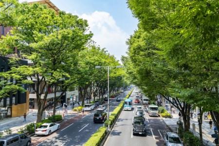 【2021年版】東京でサイクリングデートならここ!サイクリストの筆者おすすめの15スポット【景観◎・自然スポット・人気グルメなど】