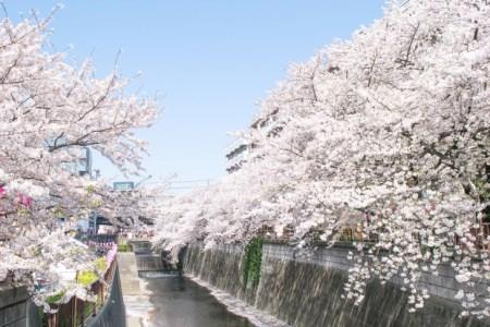 【2021年版】中目黒の桜の見えるレストラン15選!カップルのデートや記念日にもおすすめ【中目黒好きの筆者徹底ガイド】